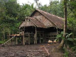 Rumah Pak Nurfea di Pedalaman Mentawai
